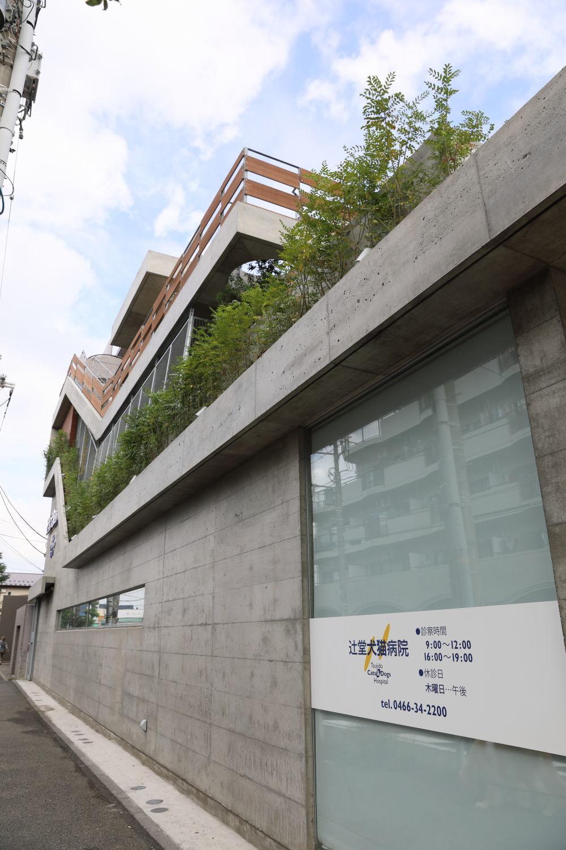 辻堂犬猫病院_b0275998_08413360.jpg