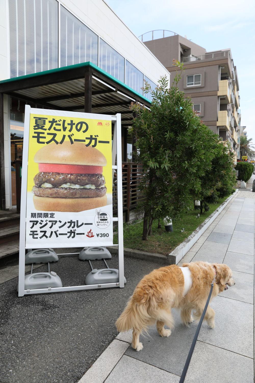 辻堂犬猫病院_b0275998_09103337.jpg