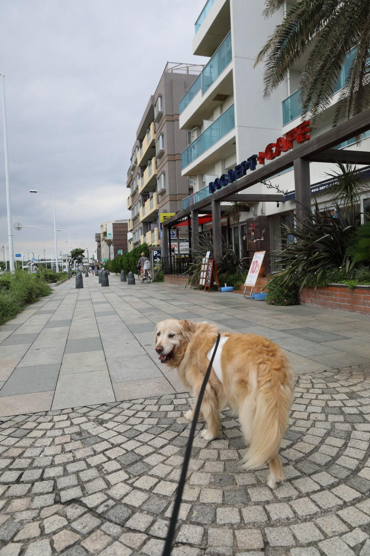 辻堂犬猫病院_b0275998_09104670.jpg