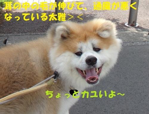f0121712_17270159.jpg