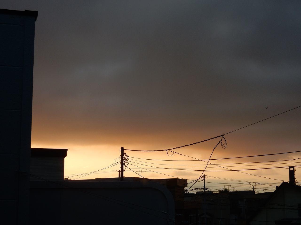 「枝・葉・草」の日_c0025115_20115830.jpg
