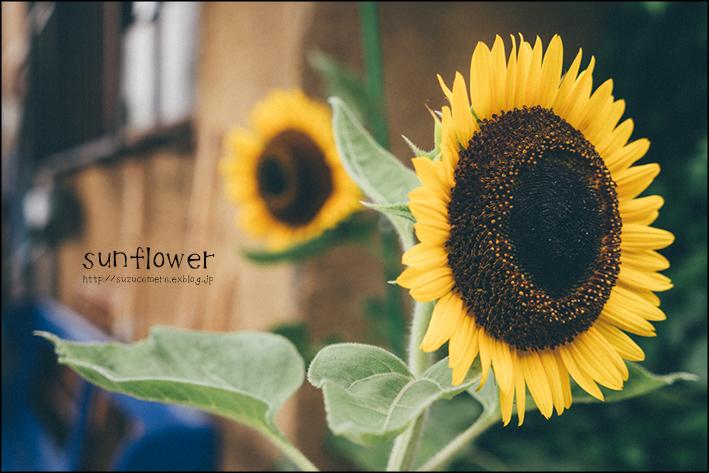 夏の花_f0100215_20363836.jpg