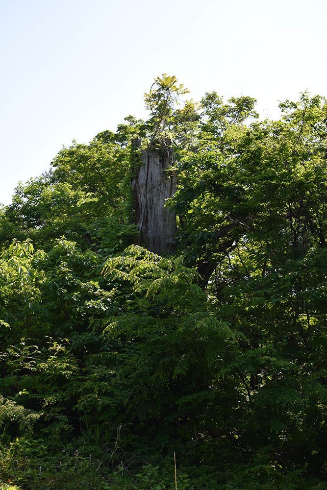 太平記を歩く。 その114 「杣山城跡」 福井県南条郡南越前町_e0158128_22015899.jpg