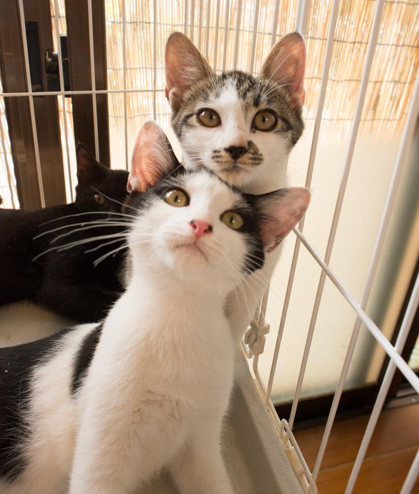 里親募集中の子猫たち_d0073743_23232091.jpg