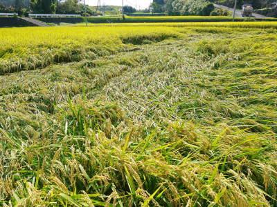 七城米 長尾農園 令和元年度のお米も美しく、元気に成長中!!平成30年度の『七城米』残りわずかです!_a0254656_19242583.jpg