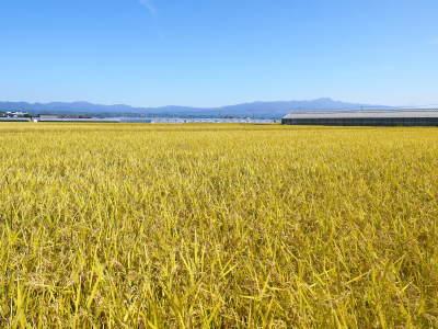 七城米 長尾農園 令和元年度のお米も美しく、元気に成長中!!平成30年度の『七城米』残りわずかです!_a0254656_19362911.jpg