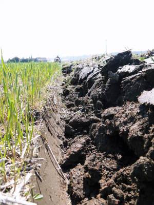 七城米 長尾農園 令和元年度のお米も美しく、元気に成長中!!平成30年度の『七城米』残りわずかです!_a0254656_19564443.jpg