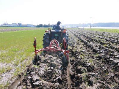 七城米 長尾農園 令和元年度のお米も美しく、元気に成長中!!平成30年度の『七城米』残りわずかです!_a0254656_19594605.jpg