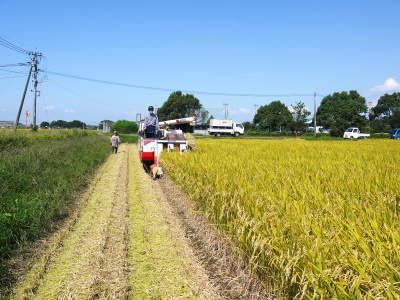 七城米 長尾農園 令和元年度のお米も美しく、元気に成長中!!平成30年度の『七城米』残りわずかです!_a0254656_20061434.jpg