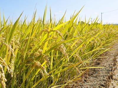 七城米 長尾農園 令和元年度のお米も美しく、元気に成長中!!平成30年度の『七城米』残りわずかです!_a0254656_20130348.jpg