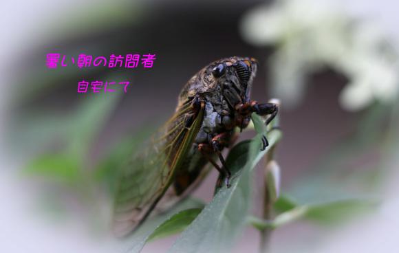 b0012595_14582157.jpg