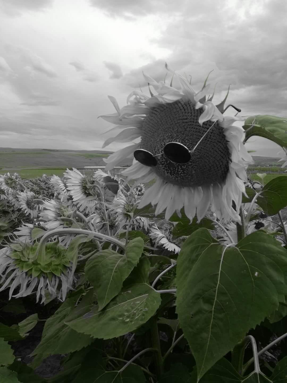 思い出のひまわり畑からBuna!_c0042797_1535284.jpg