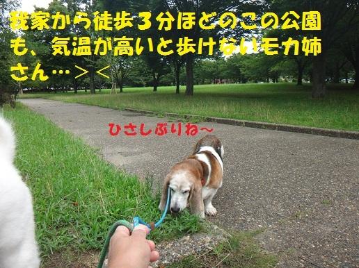 f0121712_15113984.jpg