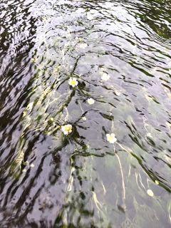 長泉町アニソンライブ&柿田川湧水群散策_f0204368_01215499.jpg