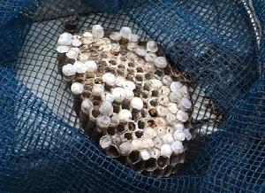 ハチの巣_b0334271_11335017.jpg