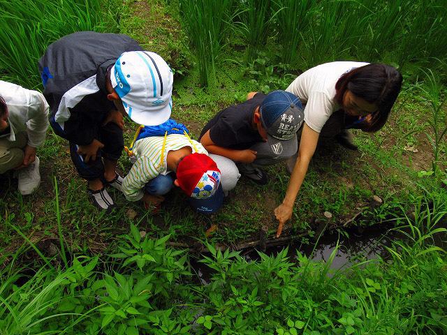夏休み自由研究「水辺の生きもの探検隊」_f0361087_10494042.jpg
