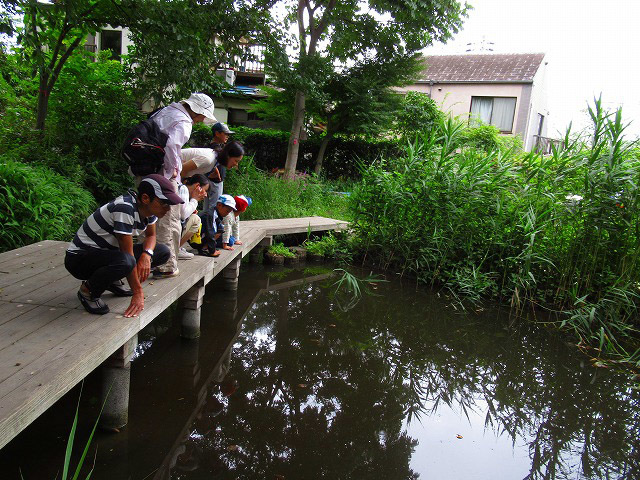 夏休み自由研究「水辺の生きもの探検隊」_f0361087_10494088.jpg