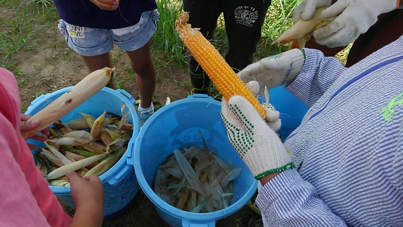 収穫・・・・・ぽんぽこ農園_f0065444_9514388.jpg