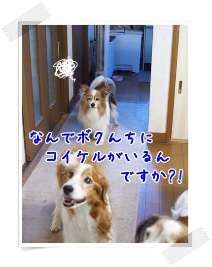 d0013149_00075355.jpg