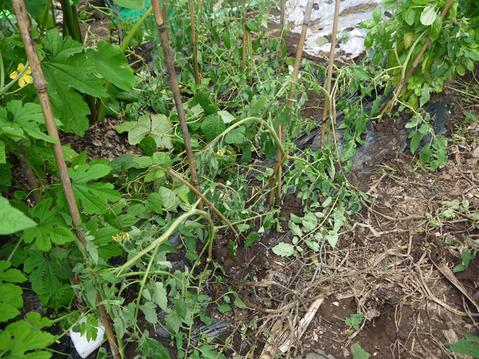ネギに追肥し土寄せ&ダイコンの種蒔き準備8・3~4_c0014967_9364743.jpg
