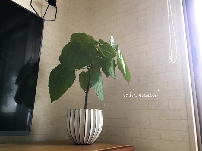 植物と相性の悪い私が育てるグリーン。それから…息子のライン。_a0341288_13211975.jpg