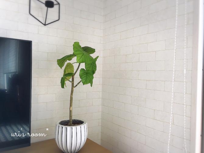 植物と相性の悪い私が育てるグリーン。それから…息子のライン。_a0341288_13212033.jpg