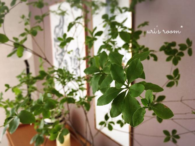 植物と相性の悪い私が育てるグリーン。それから…息子のライン。_a0341288_13500130.jpg