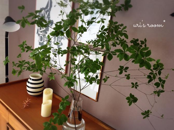 植物と相性の悪い私が育てるグリーン。それから…息子のライン。_a0341288_13500273.jpg