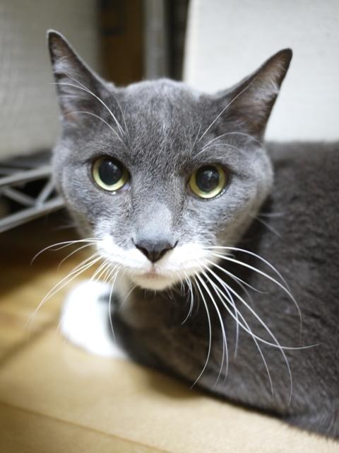 猫のお留守番 トムくん編。_a0143140_22264139.jpg