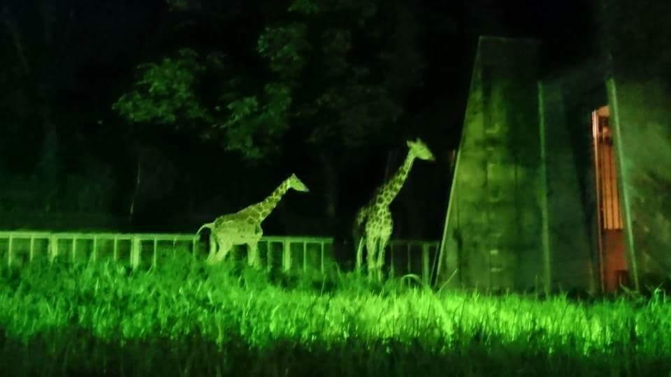 東山動植物園 ナイトズー!!_f0373339_11434235.jpg