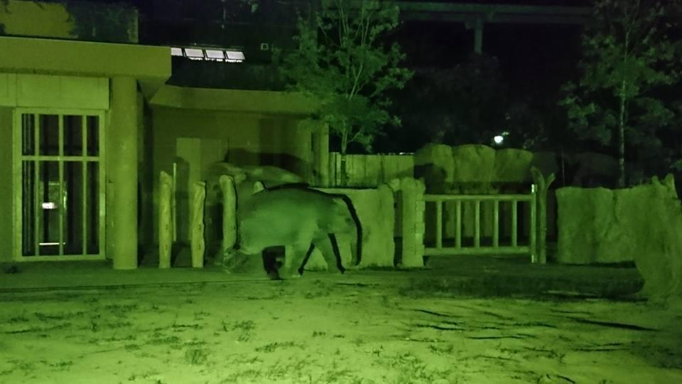 東山動植物園ナイトズーでCDかけて頂いています!_f0373339_12380819.jpg