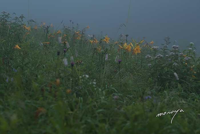 花の高原_c0085877_5341120.jpg