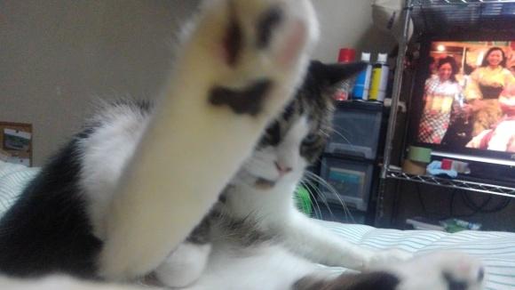 【猫】枕元で_f0141609_00002775.jpg