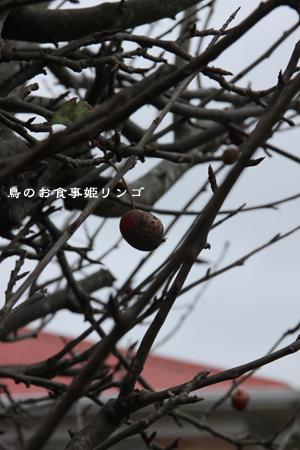 d0042827_20104304.jpg
