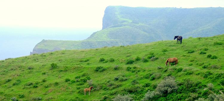 「ここは日本!?? 西ノ島の摩天崖へ行ってきました」_a0000029_15541172.jpg
