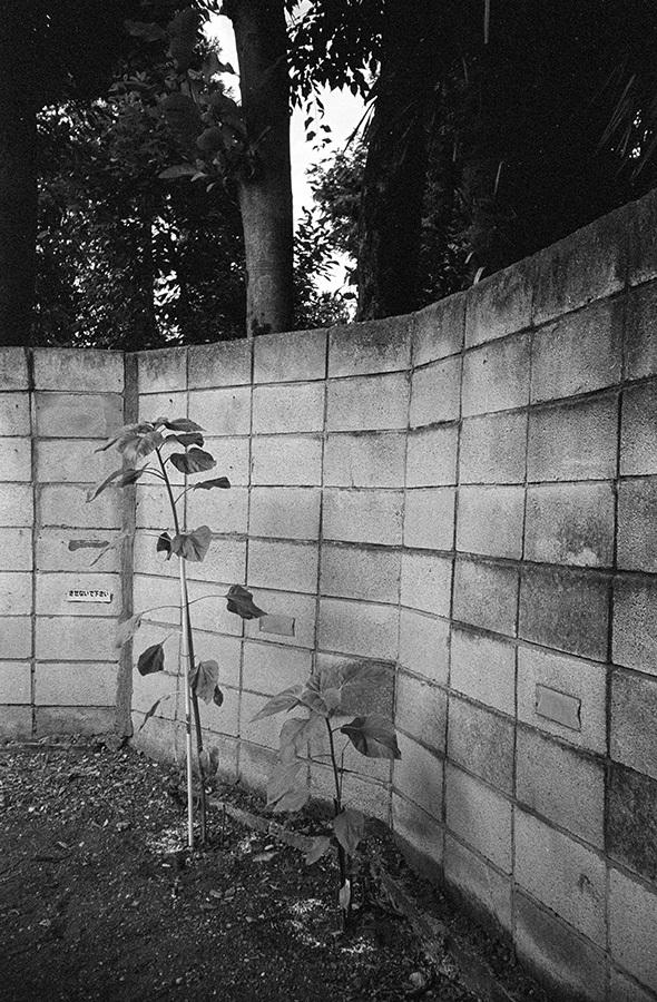 【21st Century Snapshotman 】35mm 2本勝負 ちょっとだけロモグラフィー 東中野ー中野ー新宿(2017 6/5)_c0035245_00301171.jpg