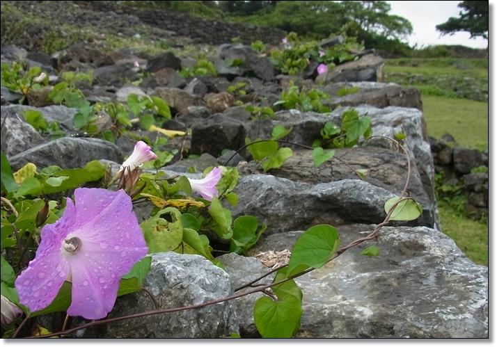 沖縄二日目_b0025947_18562862.jpg