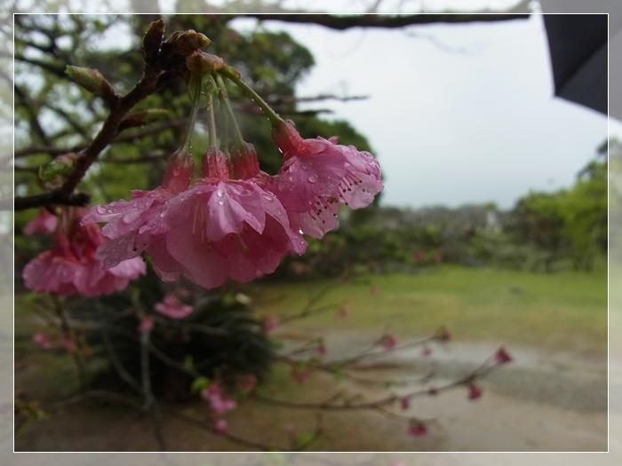 沖縄二日目_b0025947_19065769.jpg