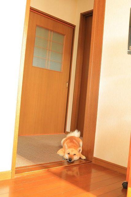 ヒトコマ写真(56)_e0365036_10090532.jpg