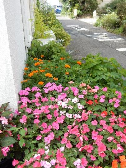\'17、8,9(水)今日は興津海水浴場レポ!_f0060461_07372689.jpg
