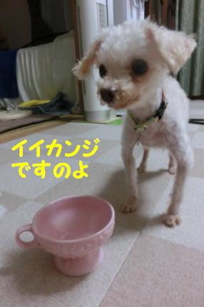 b0193480_16065576.jpg