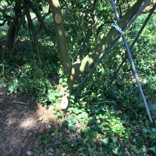 木を立て直す_d0141987_12010178.jpg