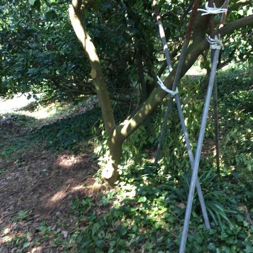 木を立て直す_d0141987_12024147.jpg