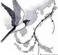 ツバメ「2度目の育雛中、巣からヒナが落下」無事に飛び立つ…2017/7/29_f0231709_12034721.png
