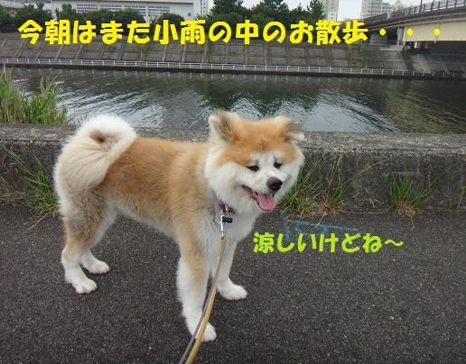 f0121712_15364179.jpg