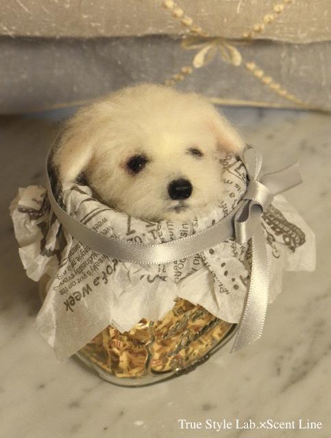 羊毛フェルトWS「マルチーズの子犬」レポート1_c0099133_21101180.jpg