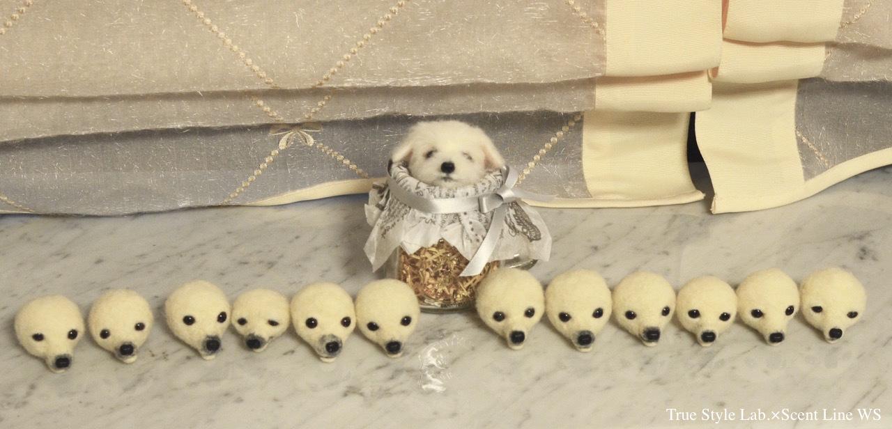 羊毛フェルトWS「マルチーズの子犬」レポート1_c0099133_21211321.jpg