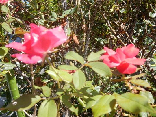 '17,8,10(木)今日は秋のような涼しさ!_f0060461_10424477.jpg