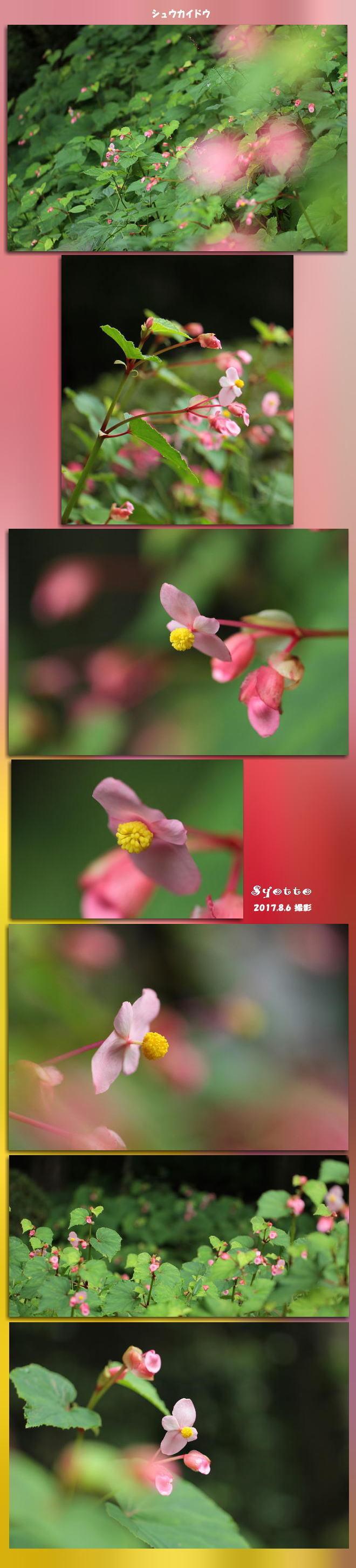 f0164592_16095264.jpg