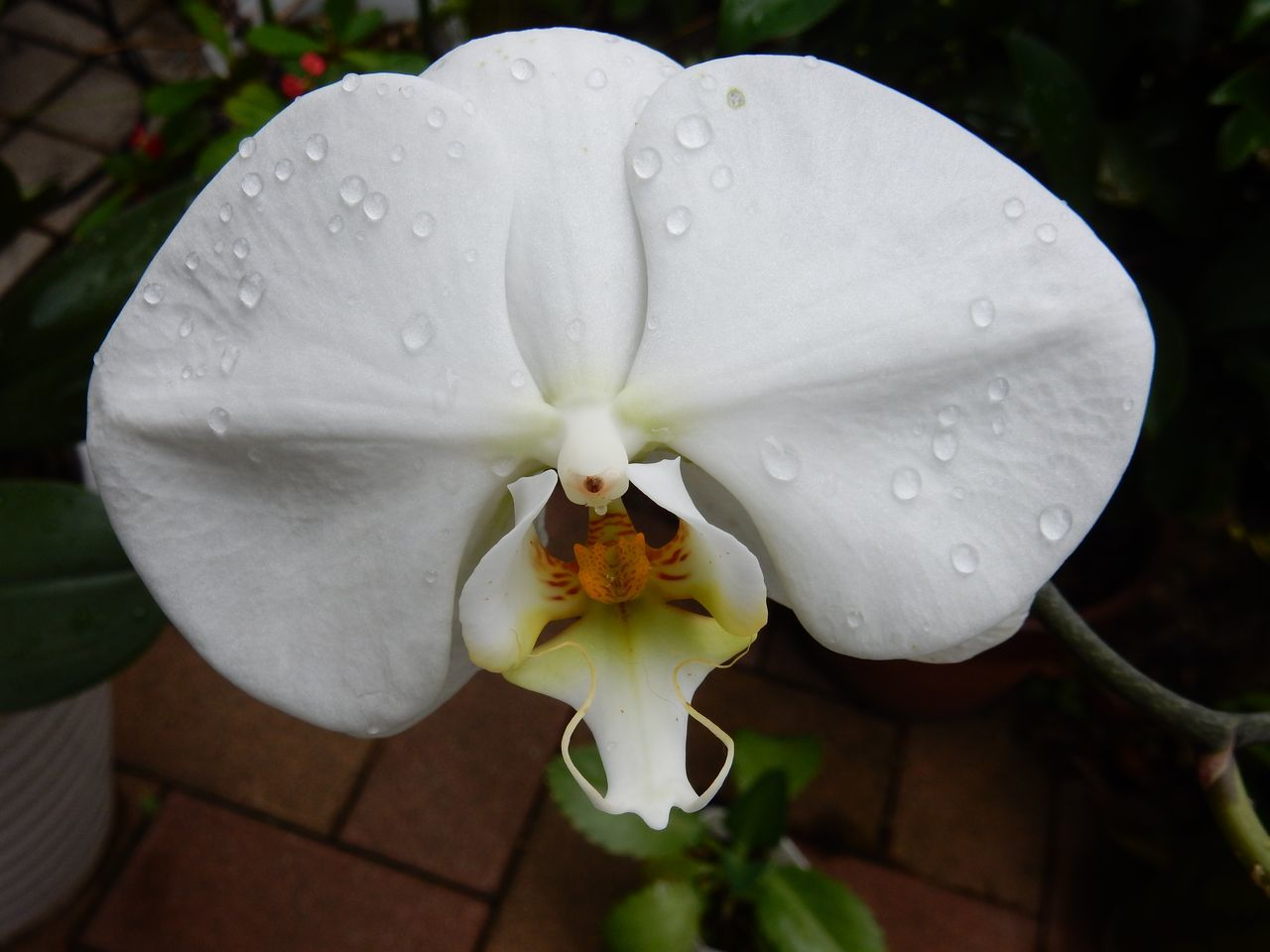 室内の植物を外に出してシャワー_c0025115_21065810.jpg
